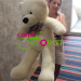 Huge teddy bear  delivery to Novosibirsk