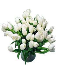 White Tulips. Moscow
