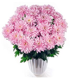 bouquets with chrysanthemums